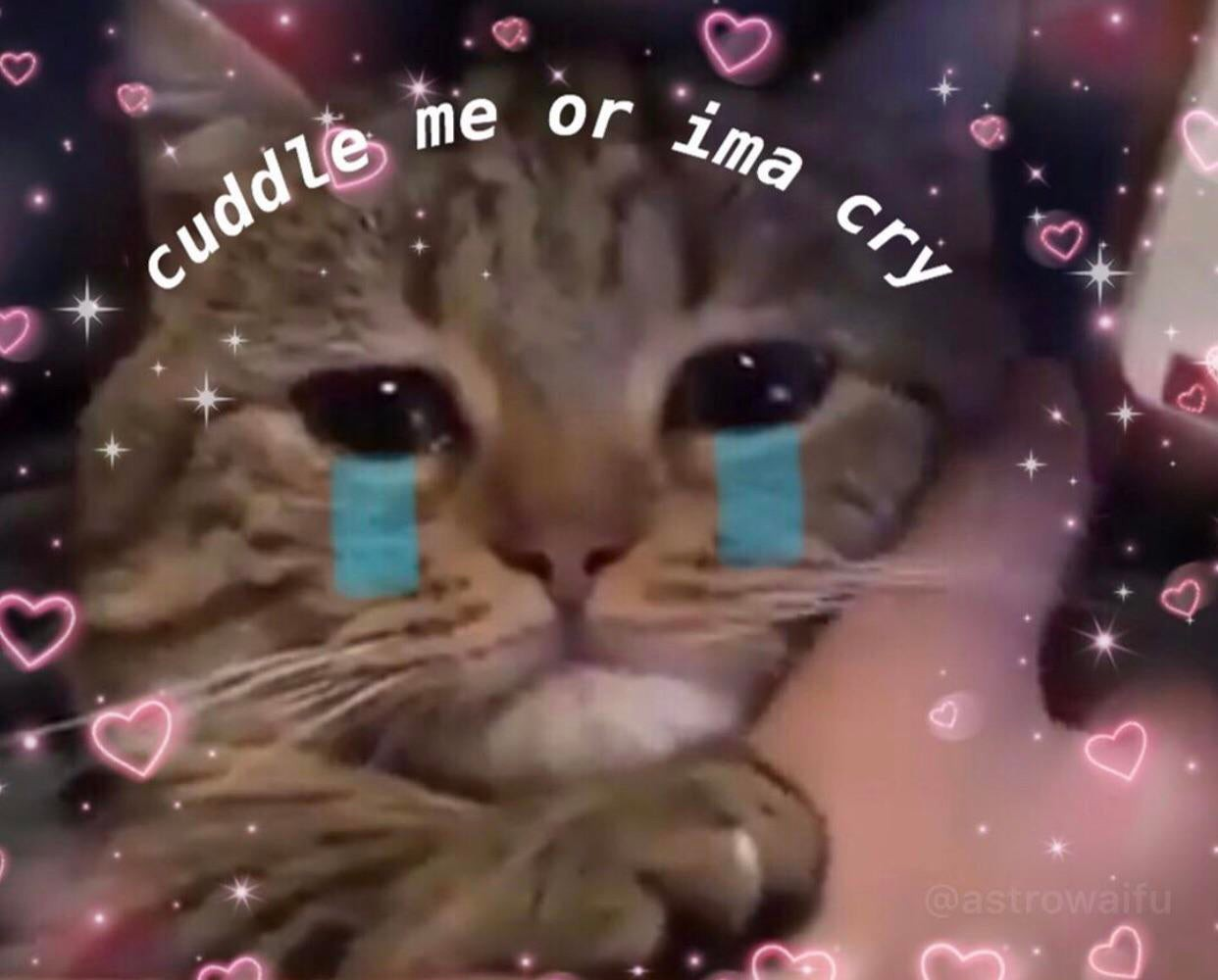 Crying Cat Memes