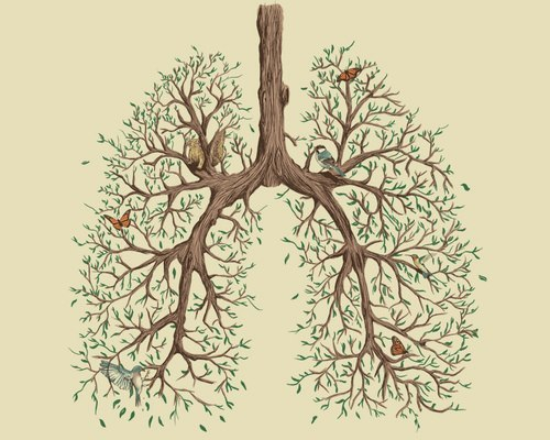 Tree Lungs: I would love to attribute this picture if I knew who drew it!