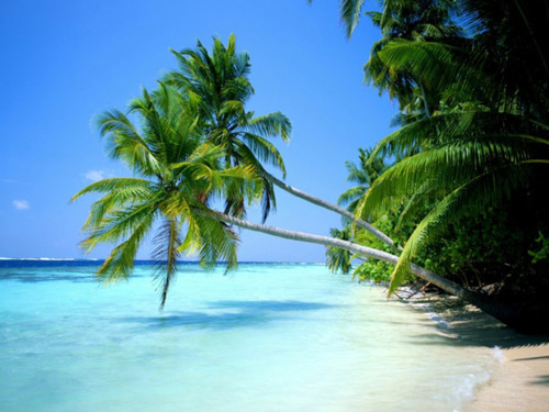 two plam trees lean far out over tropical waters with a clear blue sky behind and white sand below