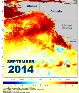 map of sea surface temperature anomaly in the northeast Pacific Ocean in September 2014