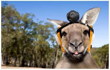 Google Street View Roo Australia - April Fool