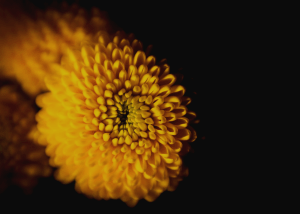 black and gold flower - Business Intelligence
