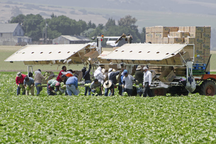 Congressional leaders talking farm labor fix