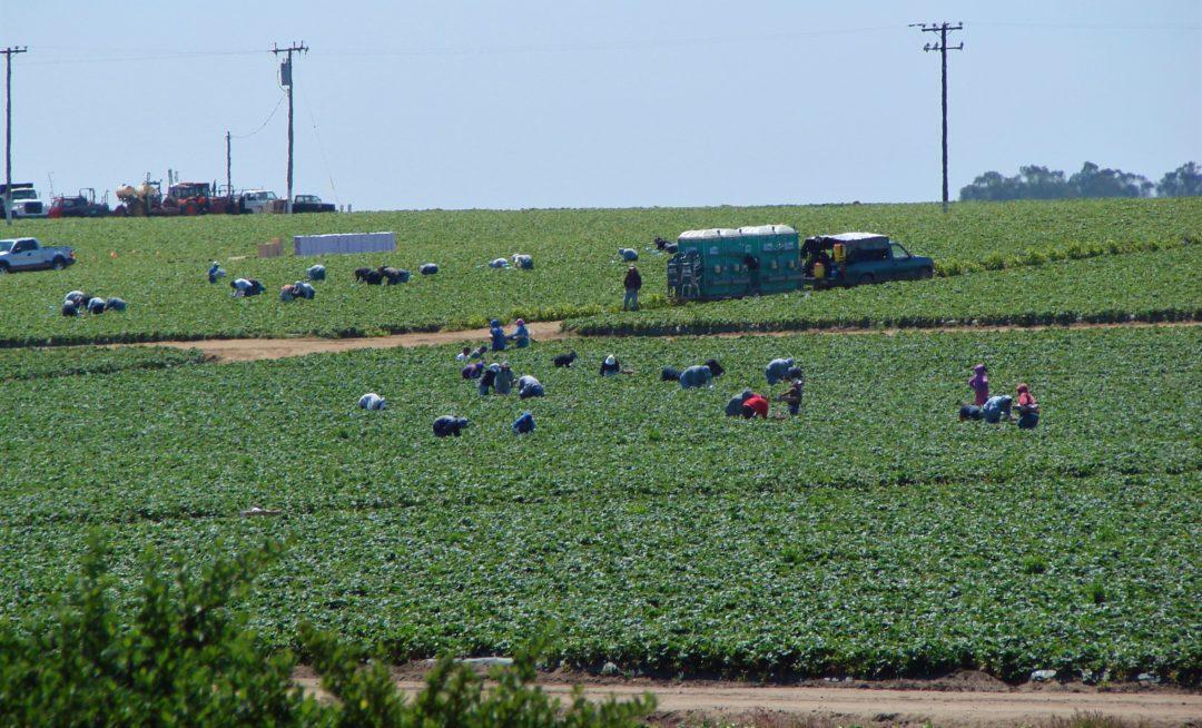 Terminating DACA impacts farm employers