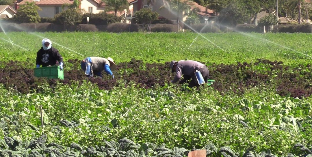 New law changes farm labor contractor licensing regulations