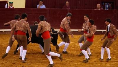 Toros Portugal