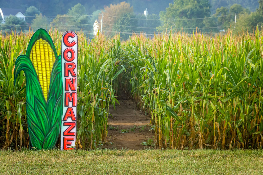 Image result for corn mazes free image