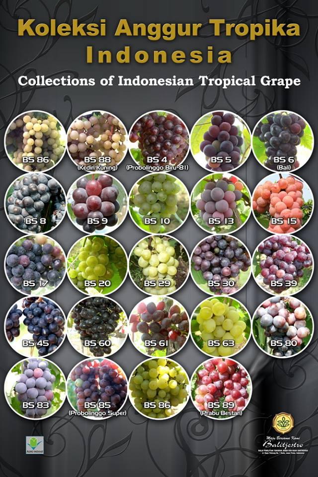 Daftar Varietas Anggur Balitjestro