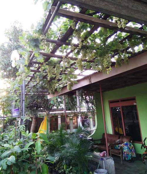 Model rambatan anggur pergola / atap