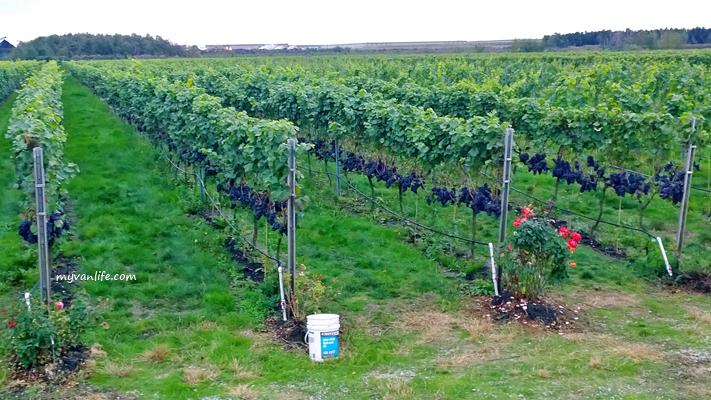 Perkebunan Anggur di luar negeri