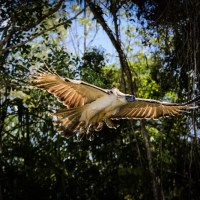 Philippine Eagle released back into the wild on Independence Day