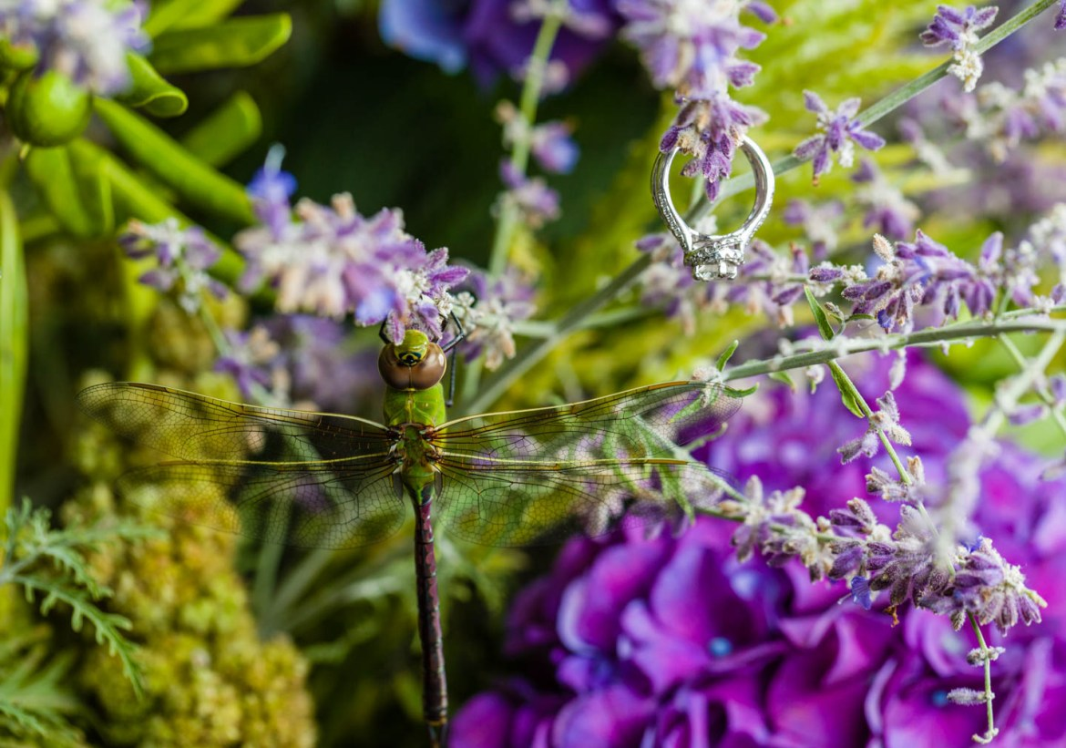 A dragonfly was hanging out on a floral decoration while I photographed the wedding rings
