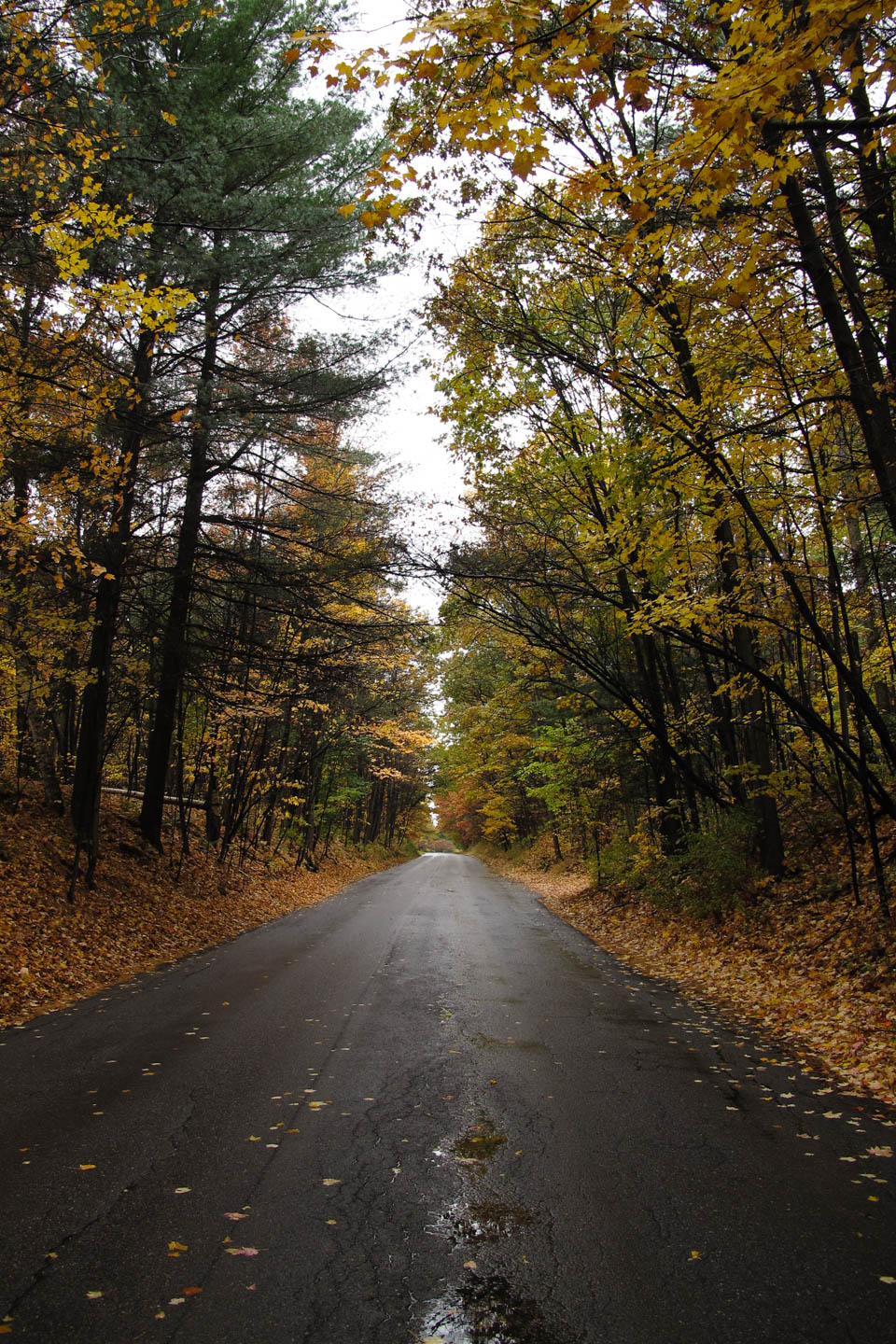 Autumn trees guard the roads of Vermont