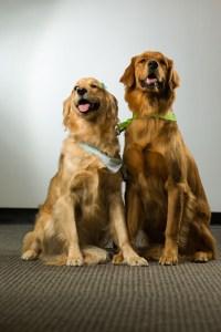 Wolfgang & Daphne the doggies