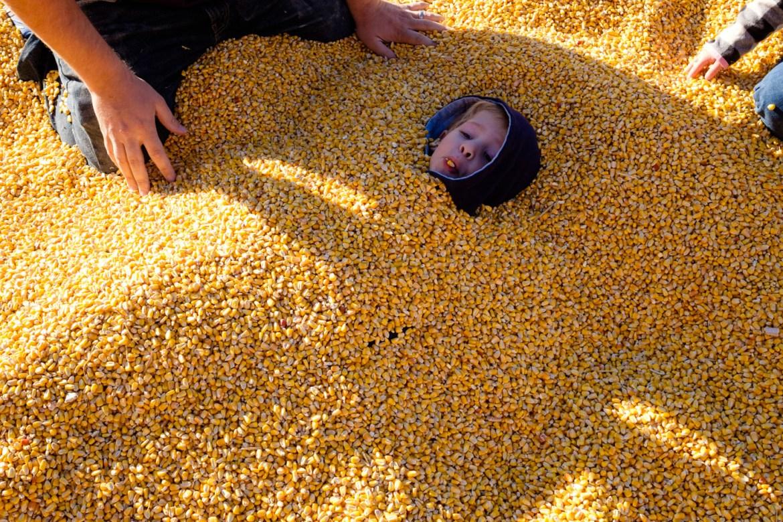 Kids buried in corn