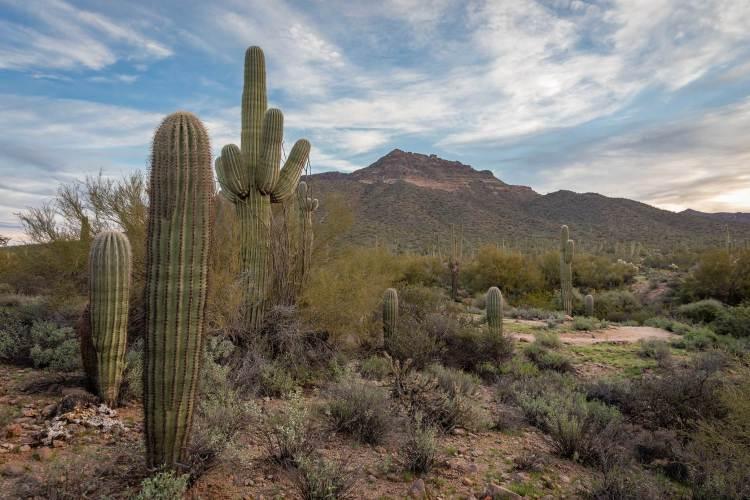 Best Photography Locations in Phoenix
