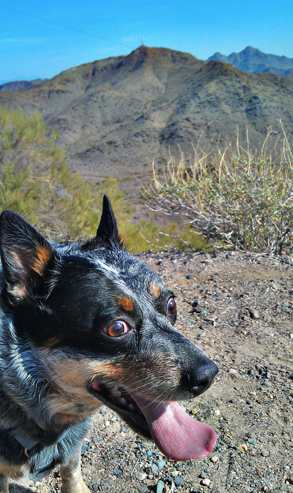 my Cattle Dog on the trail