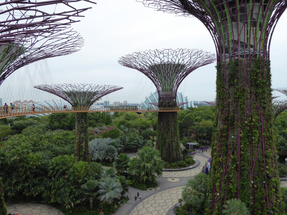 The Gardens By The Bay - Singapore Travel Guide - Supertree Grove - view from treetop walkway