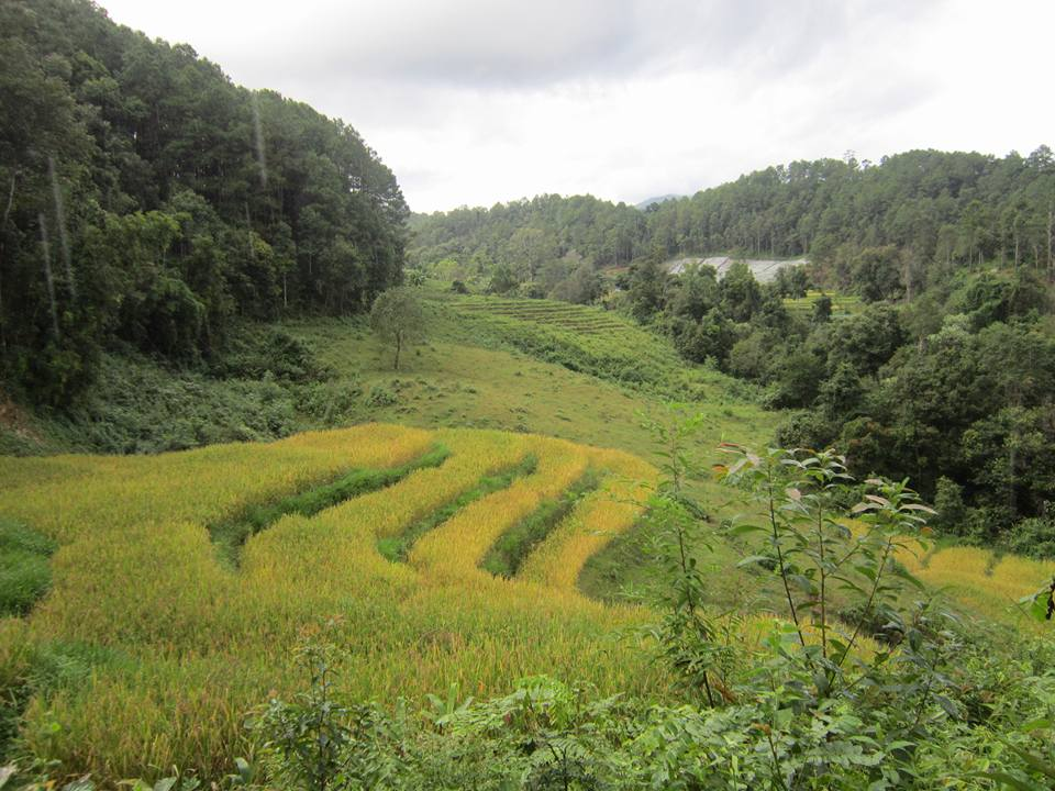 A view of rice terraces amongst jungle in Doi Inthanon National Park, one of the recommended treks in Southeast Asia