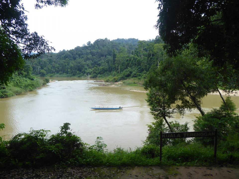 A boat in the middle of a wife river, surrounded by trees, in the rainfortest of Taman Negara