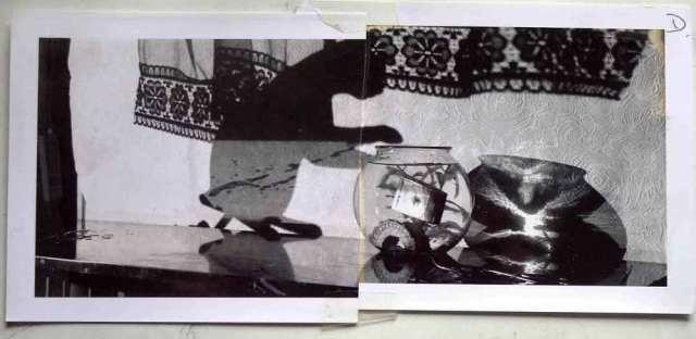 BH-Goldfish-Polaroid-1050114-sprks