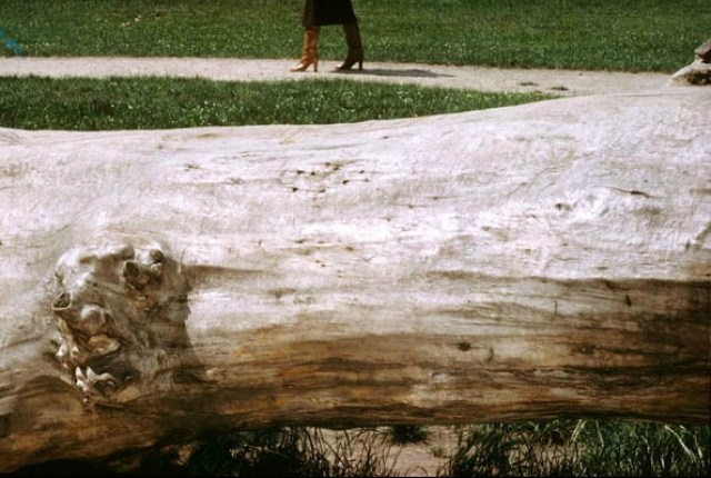 'Fallen Tree' Charles Jourdan, Guy Bourdain
