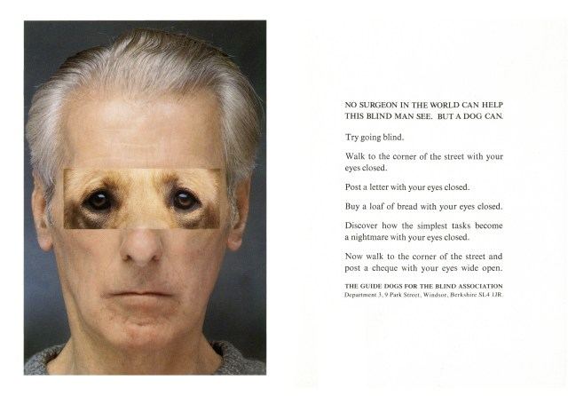 Jeff Stark, Blind 'Dog Eyes', Saatchi's-01