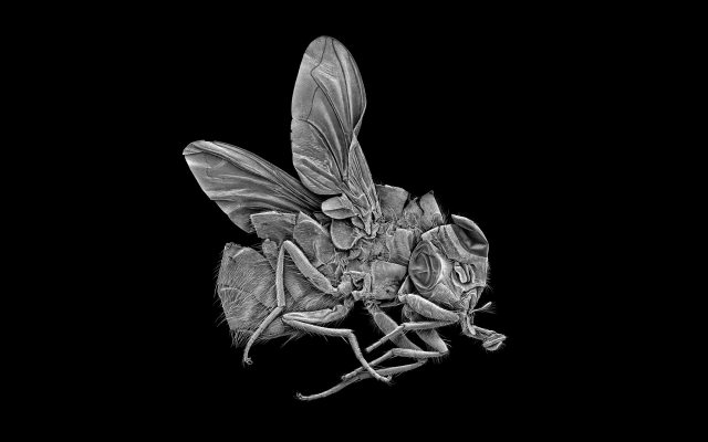 Giles Revell - Fly, Dave Dye