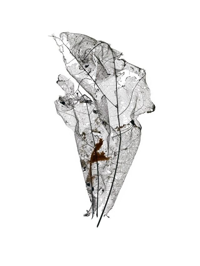Giles Revell - Leaf 2, Dave Dye