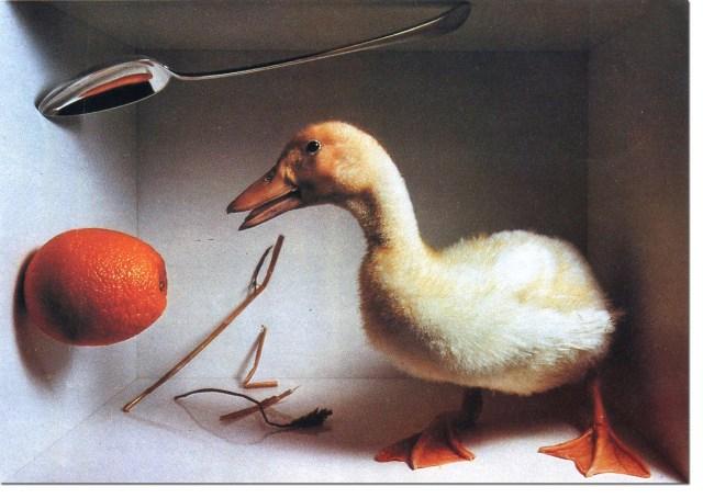 Lester Bookbinder - Duck*