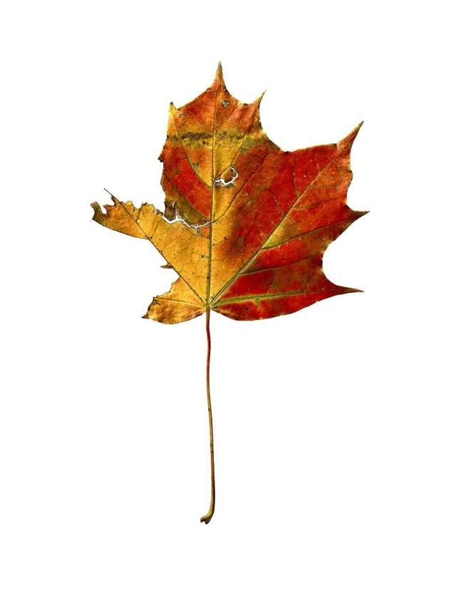 'Gold Leaf' Giles Revell-01.jpg