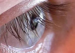 Photo of the Human Eye
