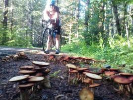 About a quarter mile section of trail is covered in little forests of neat mushrooms.