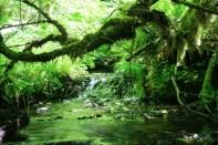 Pretty stream.