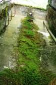 Cool moss pattern.