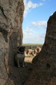 Happy dog in the rocks