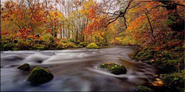 Autumn Colours of River Rothay - Canvas Print