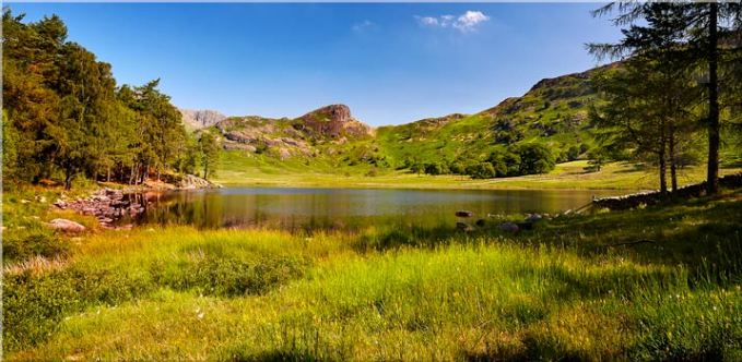 Blea Tarn Summer Meadow - Canvas Print