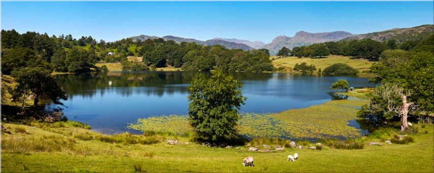 Loughrigg Tarn in Summer - Canvas Prints