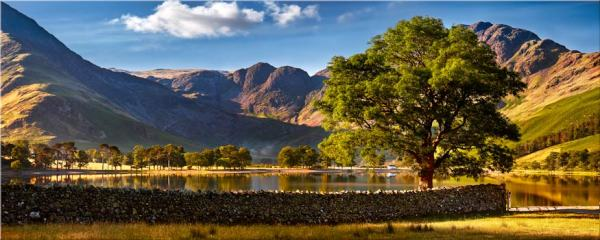 The Buttermere Oak Tree - Canvas Print