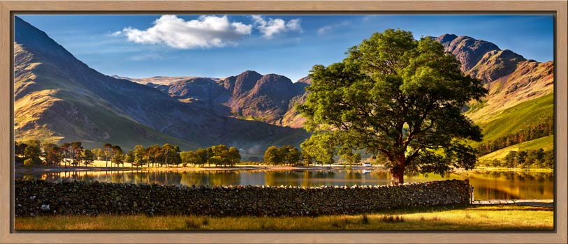 The Buttermere Oak Tree - Modern Print