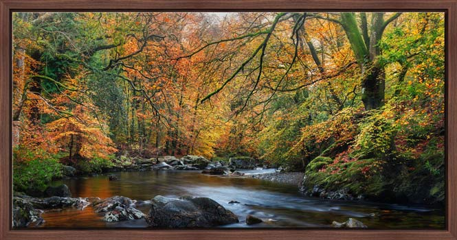 Golden Trees of Eskdale - Modern Print