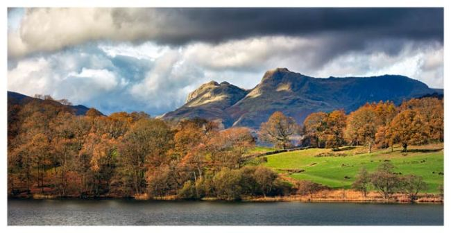 Golden Trees of Langdale - Lake District Print