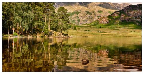 Summer Greens of Blea Tarn - Prints of the Lake District