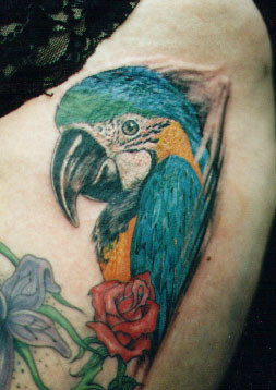 parrot tattoo Tauranga New Zealand
