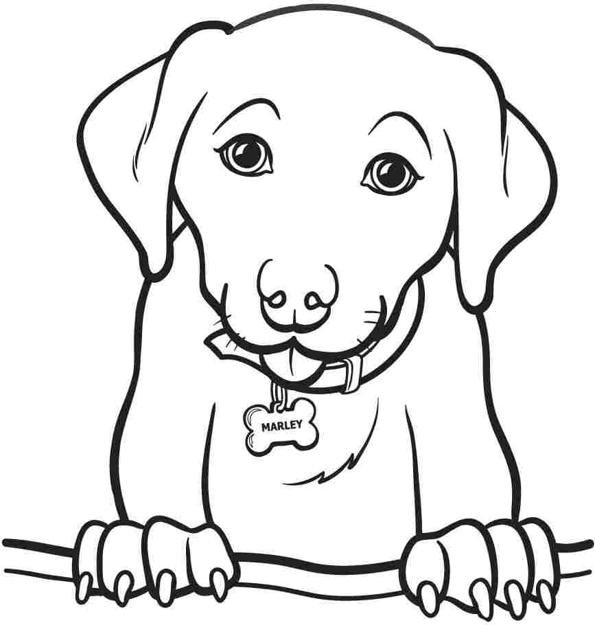 Animals Coloring Pages Animal Coloring Pages With Book Animals Also Childrens Colouring