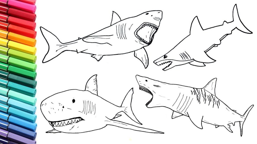 Great White Shark Coloring Pages How To Draw Shark Color Pages Collection For Children Drawing