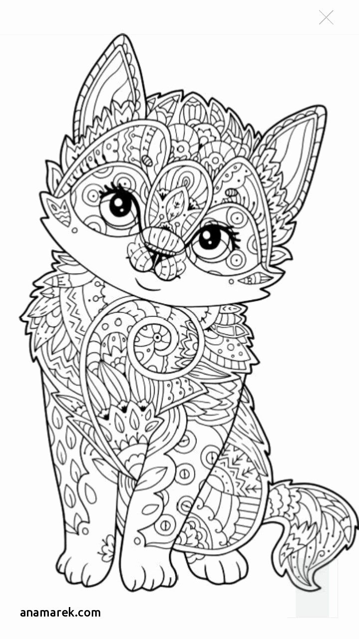 Halloween Cat Coloring Pages Cat In The Hat Coloring Pages Free Printable Christmas For Adults
