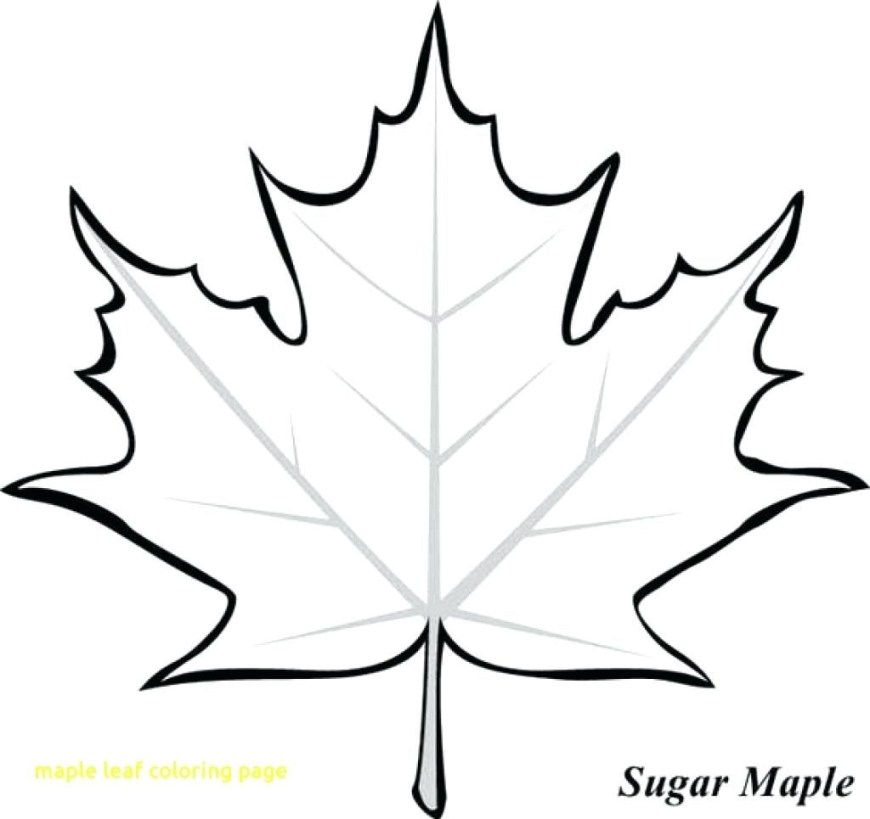 Leaf Coloring Pages Toronto Maple Leafs Coloring Pages Free Leaf Colouring Sugar Page