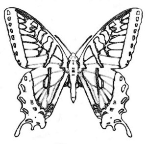 Monarch Butterfly Coloring Page Butterfly Coloring Pages For Preschool New Monarch Butterfly